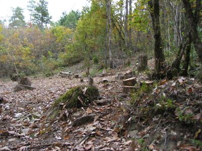 しいたけの森プロジェクト 久しぶりのしいたけの森